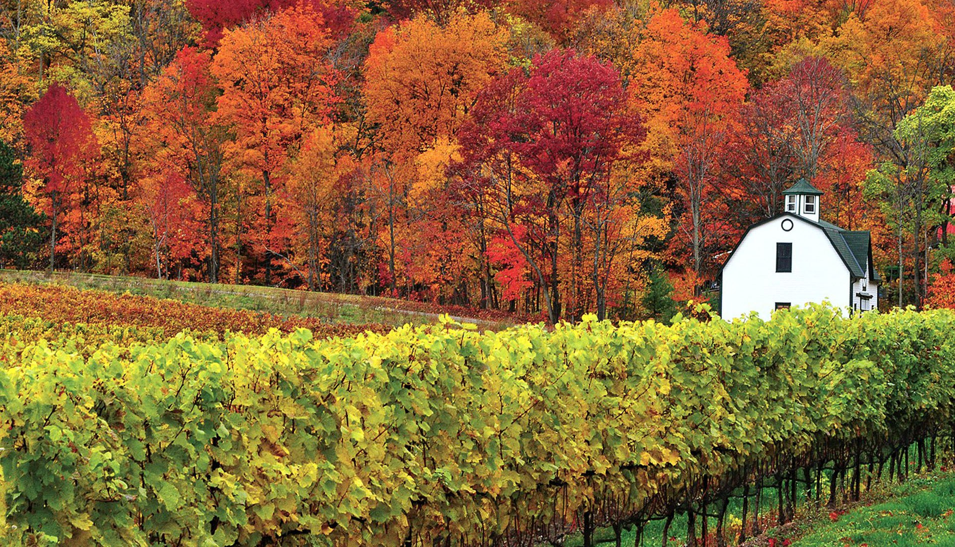Fall colours in Niagara (Photo: Destination Ontario)