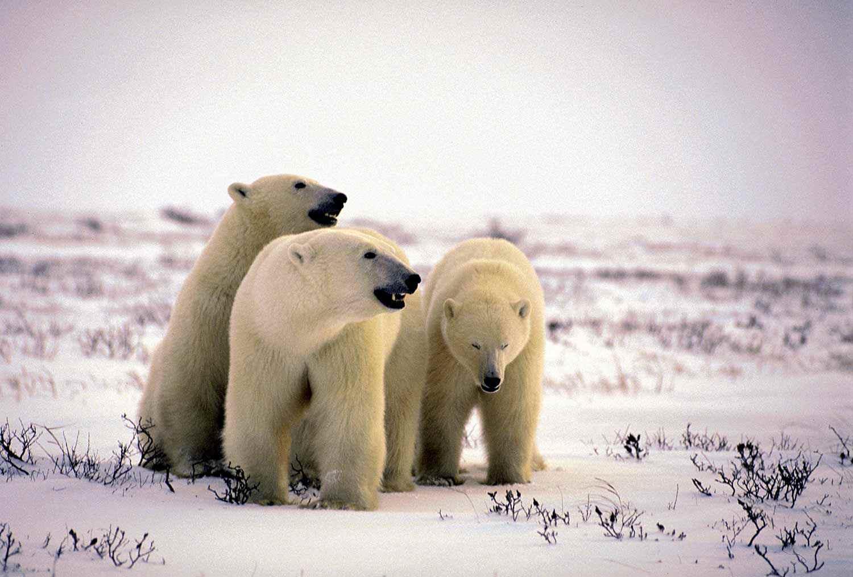 Parc provincial Polar Bear