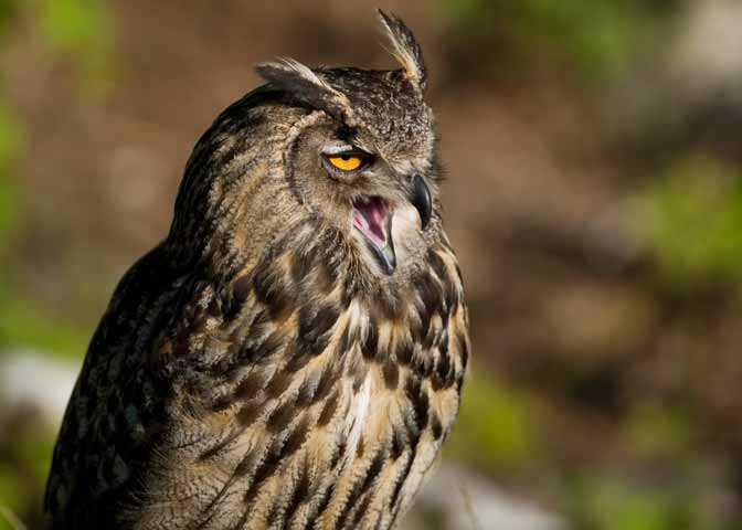 Owl (Photo: Destination Ontario)