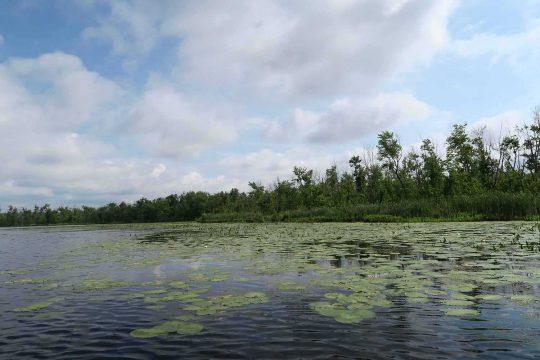 Gardiner, Grace and Neilson Properties (water lilies)