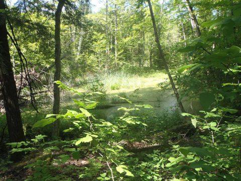 Fleetwood Creek Natural Area