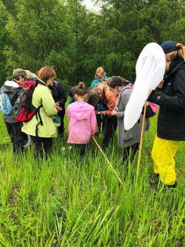 Bioblitz dans la zone naturelle du Ruisseau Fleetwood en 2019