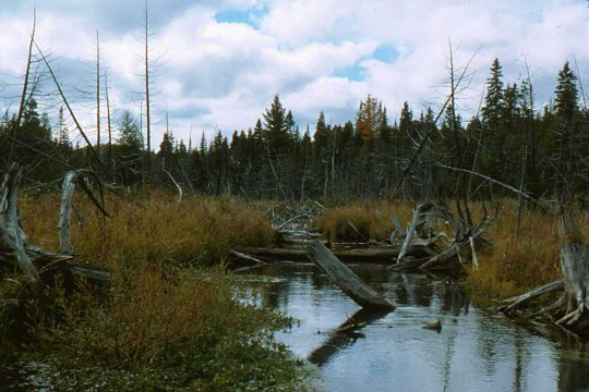 Wetlands at the Fleetwood Creek Natural Area