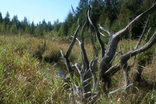 Zone naturelle du Ruisseau Fleetwood