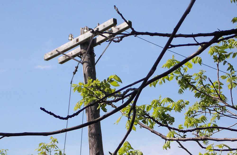 Rotary Trail Telegraph Poles